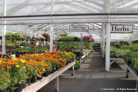 Merrifield Garden Center by Janet Davis Explores Colour In The Garden The World