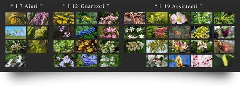 i 38 fiori di bach fiori di bach