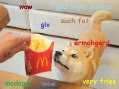 magical doge google search doge  life pinterest