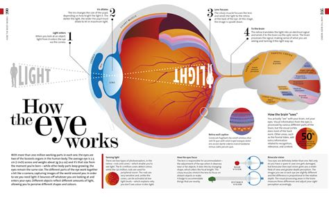 how does the eye see color how the eye works tom howey book design and typography