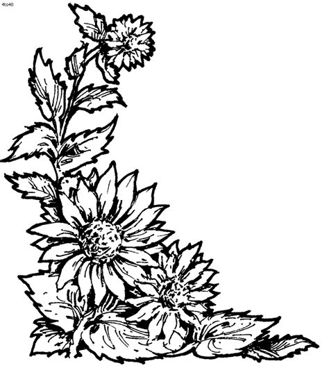 coloring pictures of wildflowers sunflower coloring pages bestofcoloring com