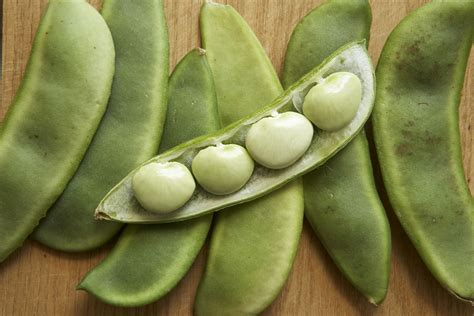 The Bean Lima Comes In Like A by How To Grow Lima Beans
