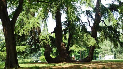 associazione giardini margherita jaya green estate 2014 associazione jaya