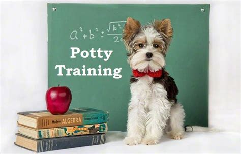 how to house train a dog fast the 26 best images about how to potty train a puppy on pinterest training animals