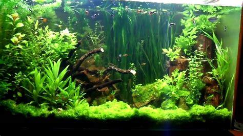 aquascape reviews the world s largest nature aquarium and aquatic plants