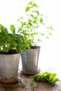 herb garden indoor 108 best images about the garden on pinterest gardens recycled tin cans and garden sheds