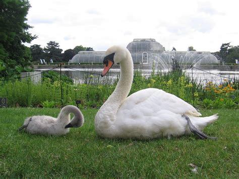 botanical gardens kew the royal botanical gardens at kew the globe trotter