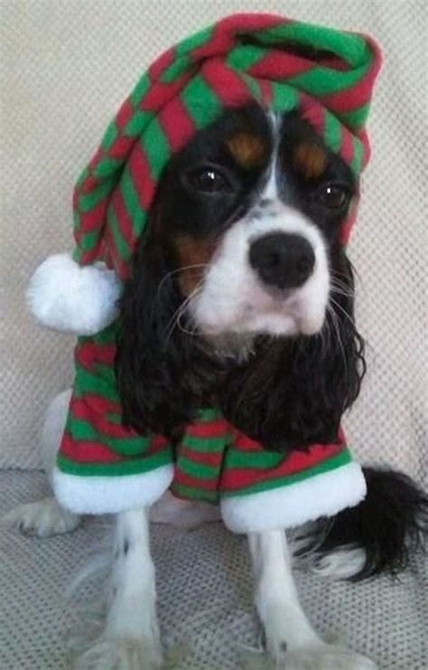 pets wearing christmas outfits riot fest