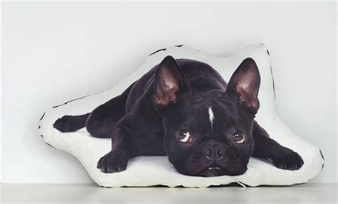 Animal Shaped Pillows by Pet Shaped Pillows Allowed On The Style