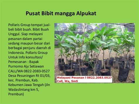 jual bibit tanaman buah dalam pot jual bibit mangga