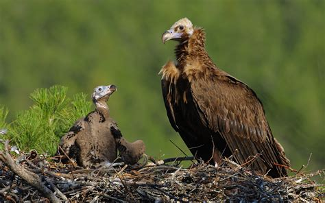 quick facts about vultures that not everyone is aware of