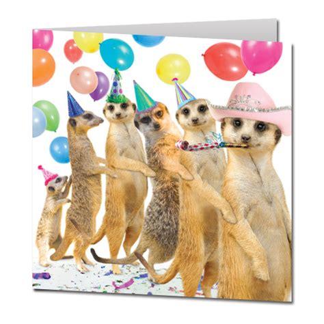 new year animal birthday happy birthday salsakat squiggy quirkie meerkat jeopardy