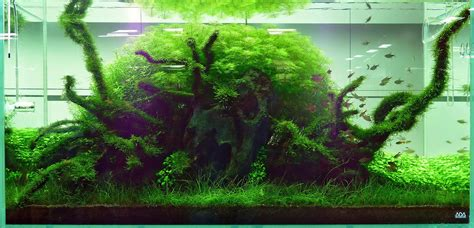 ada aquascape basic forms aqua rebell
