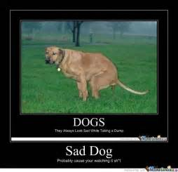 Sad Okay Meme - sad dog by theodore meme center