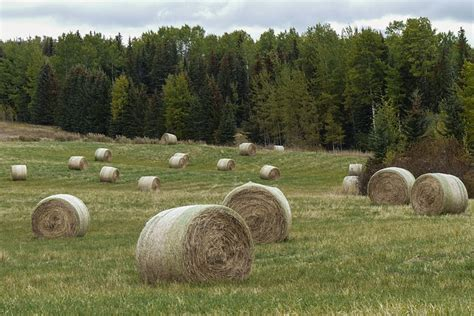 Landscape Pictures With Balls Free Photo Hay Balls Field Grass Landscape Free