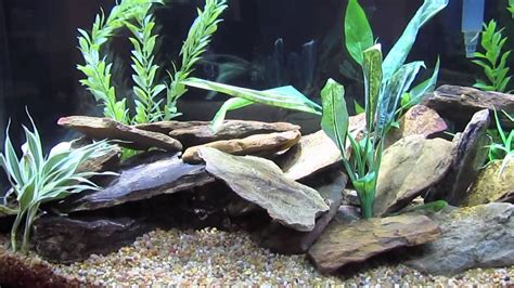 Cichlid Aquascape by Aquascaping Cichlid Tank