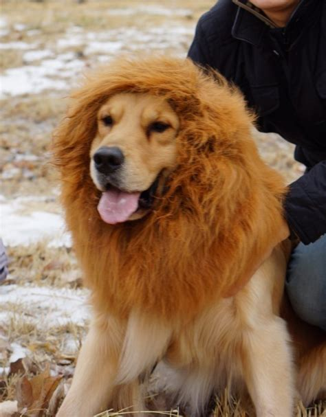 golden retriever mane costume popular golden retriever costumes buy cheap golden retriever costumes lots from china