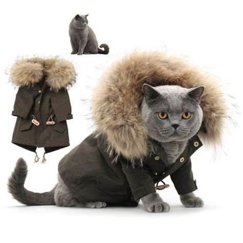 Cat Wardrobe by 10 Best Winter For Your Cat Pets World