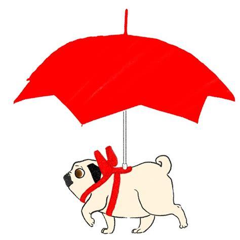 pug umbrella umbrella pug pugs pugs pugs