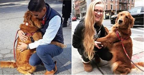 louboutina golden retriever friendly golden retriever spreads on the streets by giving out hugs to strangers