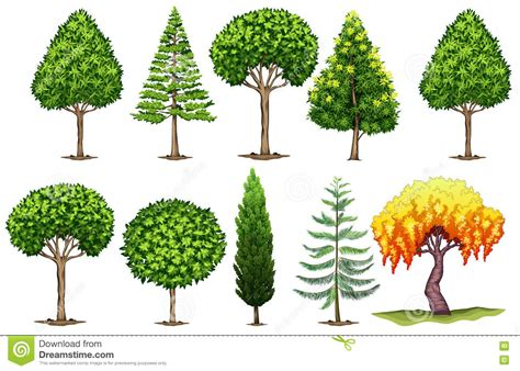 tree types different types of trees pictures to pin on pinterest