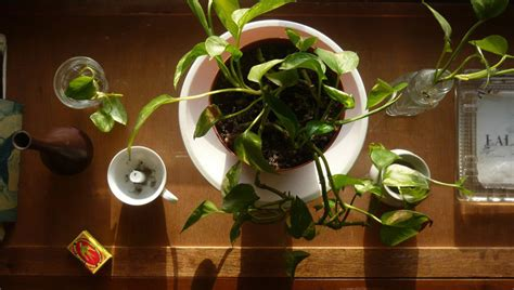 plants for apartments 15 air purifying plants to add to your apartment or home