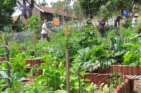 backyard permaculture australia urban food garden design and landscape architecture