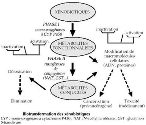 Detoxicated Definition by D 233 Toxification D 233 Finition C Est Quoi