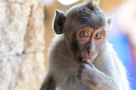 ubud monkey forest  tips  visiting balis famous