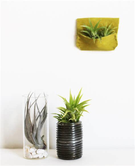 milkweed planter passion design milk milkweed greening your modern mini home design milk