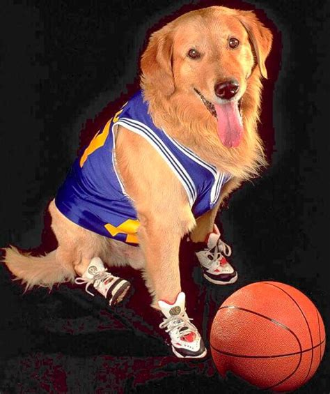 air bud air bud ranked seven inches of your time