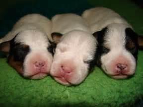 puppy world newborn puppy pictures