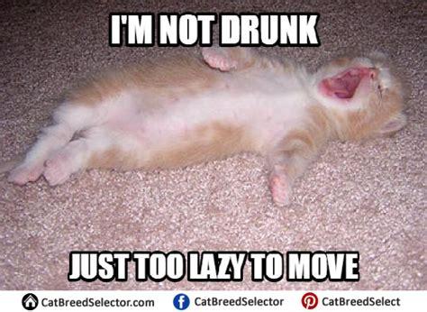 Happy Kitten Meme - kitten memes cat breed selector
