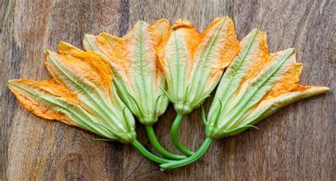 fiori di zucchina frittelle integrali con fiori di zucchina veg