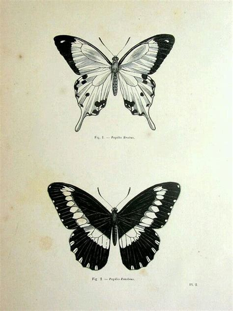 tattoo butterfly vintage 73 best images about borboleta on pinterest moth tattoo