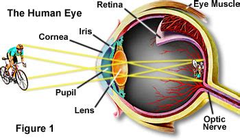 how does the eye see color molecular expressions science optics and you light and