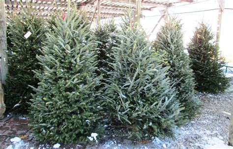 christmas trees rockland county supreme mulch in