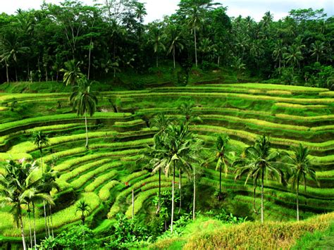 A Place Indonesia Bali The Best Places To Visit In Indonesia