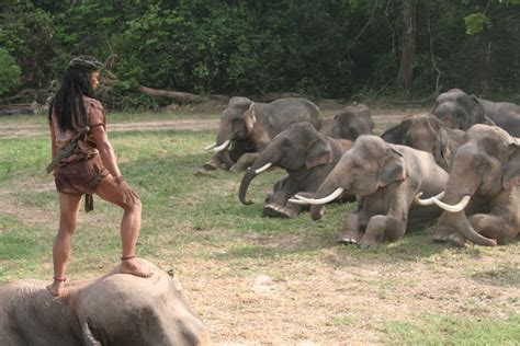 film ong bak 2 elephant fight my cultural landscape all s fair in love and war