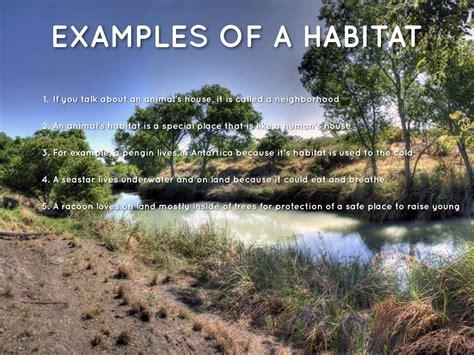 exle of habitat habitats vs ecosystems by