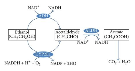 Acetaldehyde Detox by The Effect Of Inflammatory Cytokines In Alcoholic Liver