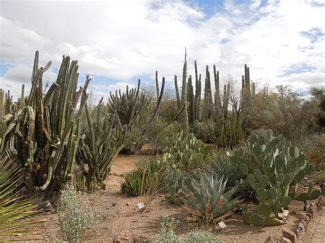 Original File 4 000 215 3 000 Pixels File Size 2 17 Mb Az Desert Botanical Garden