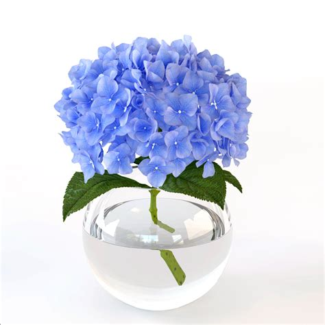 Hydrangea In Vase by Branch Hydrangeas Glass Vase Max