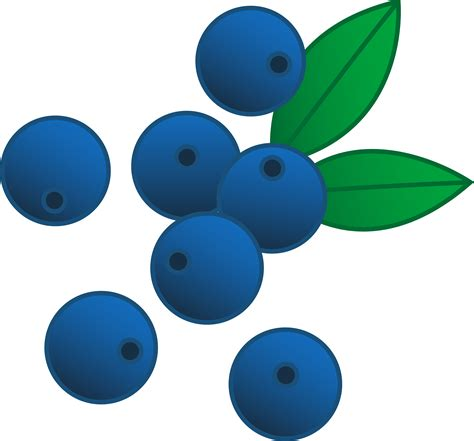 blueberry clipart blueberries vector illustration free clip