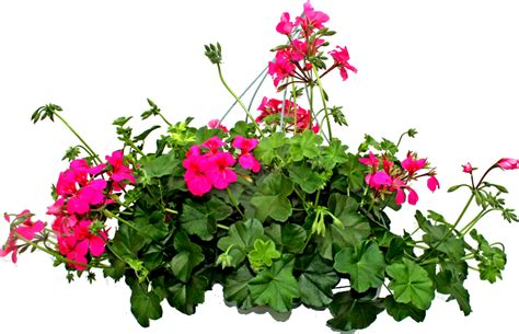 imagenes de flores sin fondo zoom dise 209 o y fotografia febrero 2017