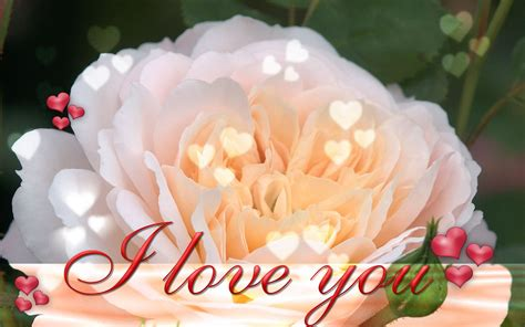 Wallpaper Flower I Love You | i love you pictures images graphics and comments