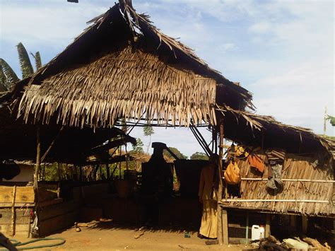 Minyak Kayu Putih Namlea ironi minyak kayu putih dari pulau buru kompasiana