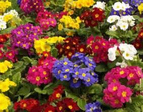 como plantar um jardim de flores o meu jardim