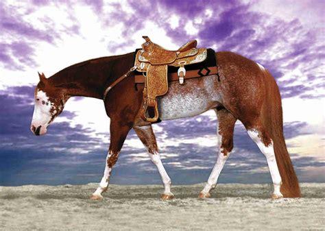 sorrel color pinto paint horses overo a solid color sorrel