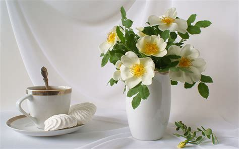 Food For Flowers In Vase by Pictures Bouquets Flowers Cup Food Vase Still